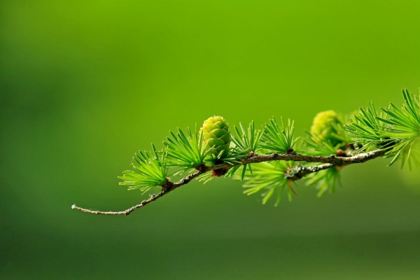 green-tree-plant-leaves