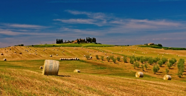 agriculture-bale-countryside-crop